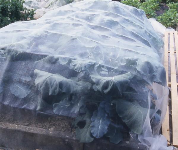Insektenabwehrnetz (3,50m x 6m) - Maschenw. 1,35 x 1,35mm