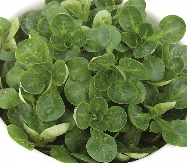 Feldsalat Granon
