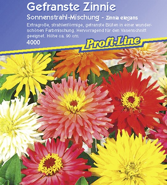 Zinnie Sonnenstrahl Mix