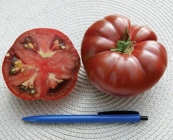 Tomate Noir Crimee
