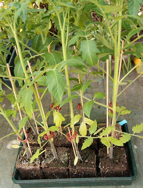 pflanzen st tzst be 40 cm l nge 10 st ck pikierstab etiketten anzucht wolfgang On pflanzen versandhandel