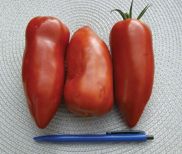 Andenhorn Tomate Andine