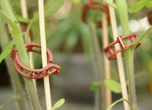 Pflanzen - Stützstäbe (25 cm Länge; 10 Stück)