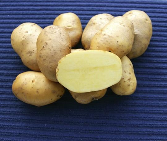 Pommes Kartoffel Agria 2,5 kg