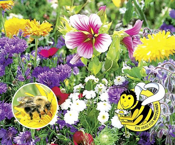 Bienenfutter Pflanzen, 1-jährige Mischung