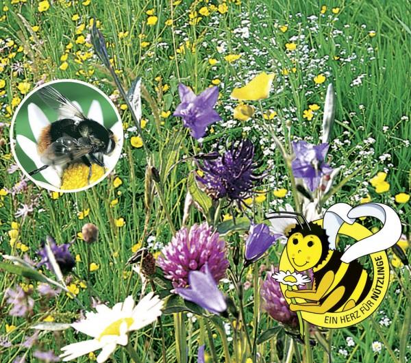 Bienenfutter Pflanzen, mehrjährige Mischung